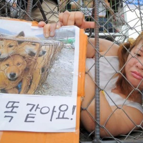 Betilthatják a kutyahúsevést Dél-Koreában