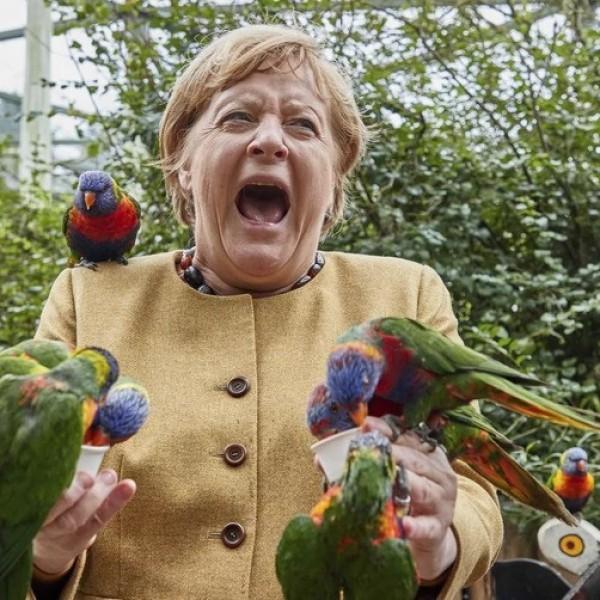 """Papagáj """"támadta meg"""" Angela Merkelt"""