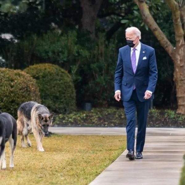 Száműzik Biden kutyáit a Fehér Házból, mert az egyik eb megharapott valakit